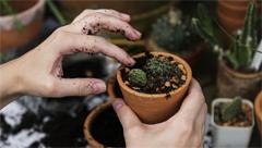 Associazioni, enti no profit, gruppi informali di persone possono candidarsi per gestire l'area che dovrà essere destinata ad orto o giardino e coinvolgere persone/soci nella gestione - scadenza domande 5 gennaio 2018