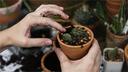 Via Montericco diventa orto o giardino: bando per l'assegnazione dell'area