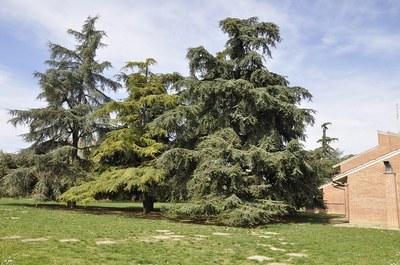Parco /2